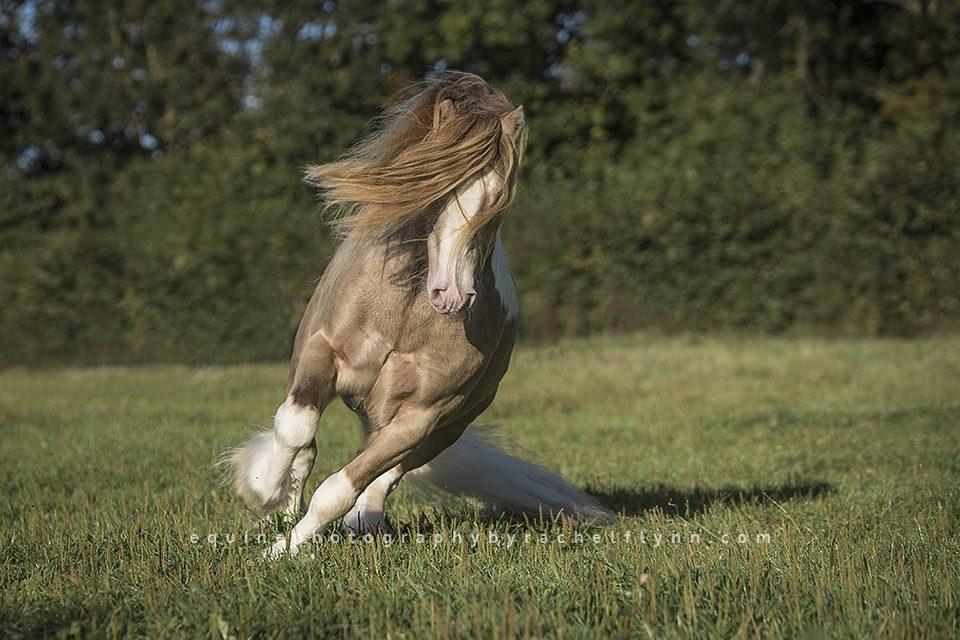 Equine-Photography-By-Rachel-Flynn-Web-1522.jpg