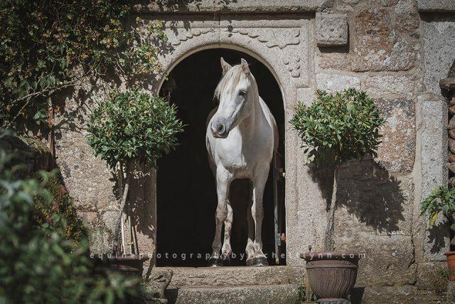 Equine-Photography-By-Rachel-Flynn-Web-2349.jpg