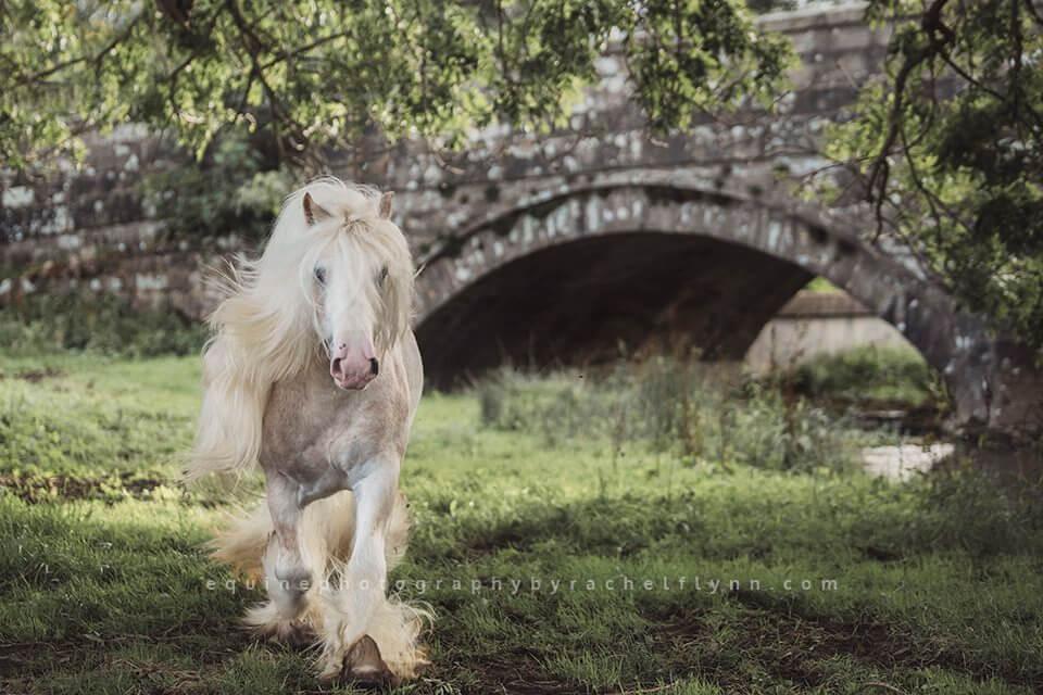 Equine-Photography-By-Rachel-Flynn-Web-7255.jpg