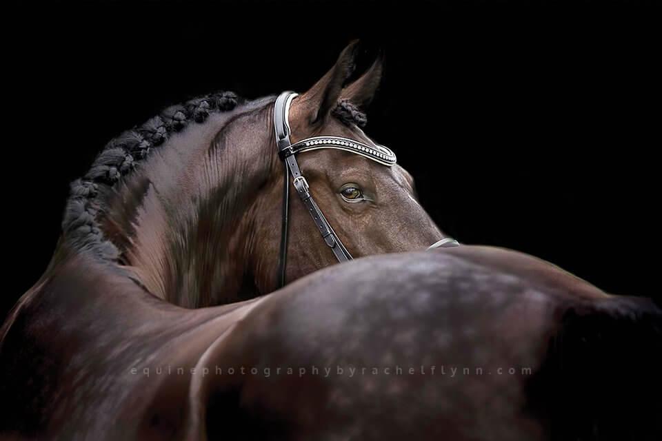 Equine-Photography-By-Rachel-Flynn-Web-Leonie.jpg