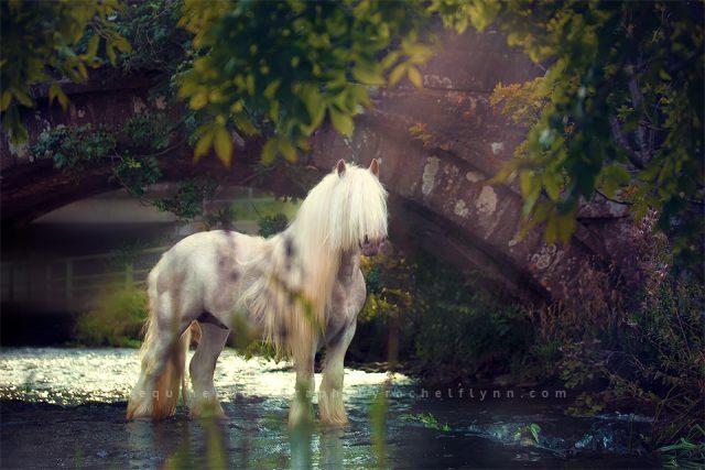 Equine-Photography-By-Rachel-Flynn-Web-7410.jpg