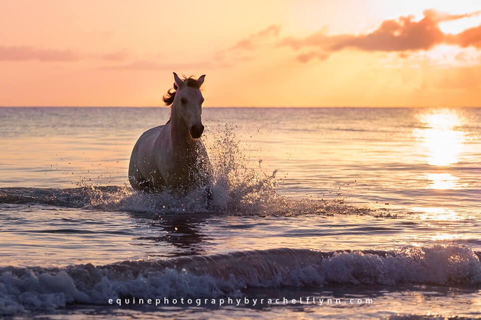 Farleigh Aramis sunrise beach photoshoot