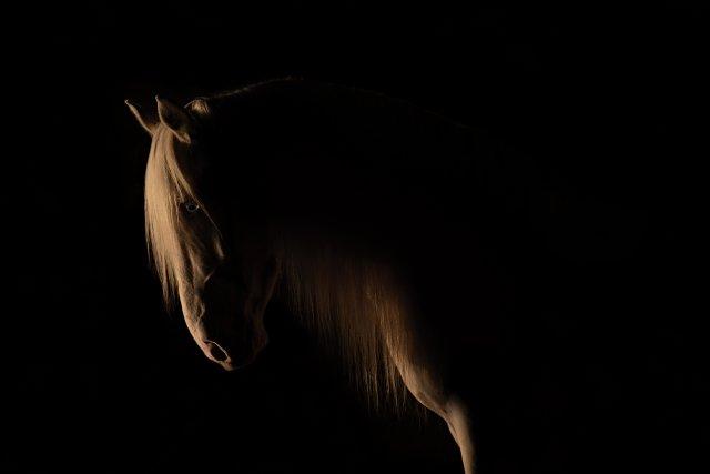 EquinePhotographyByRachelFlynn-Web-1797