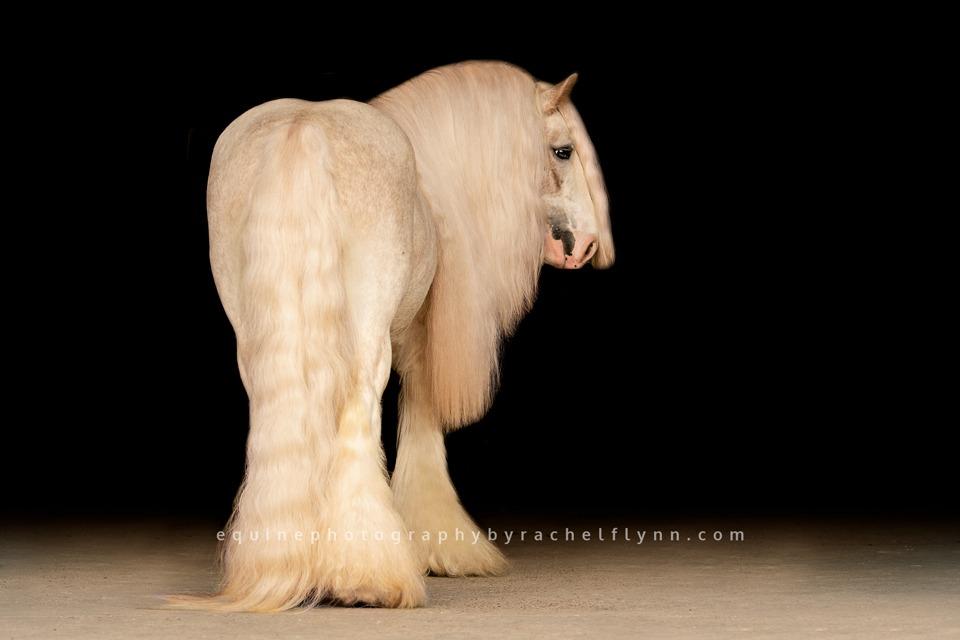 Equine Photography By Rachel Flynn